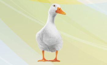 Mycoad Duck
