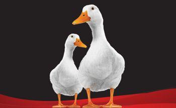 Target organ protection. Anti-Mycotoxin Additive on Ducks