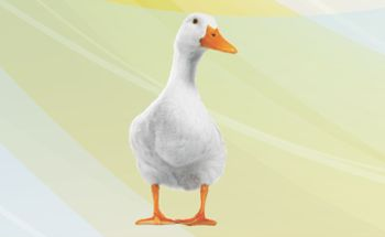 Efficacy of an anti-mycotoxin additive in preventing the toxicity of aflatoxin in ducks