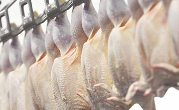 Mycotoxin lesions in the slaughterhouse-broilers