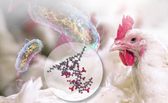 Endotoxins in commercial poultry operations