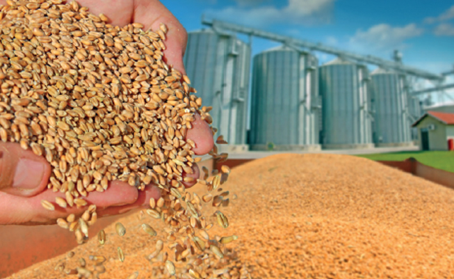 Why it's difficult to detect high levels of mycotoxins in clinical mycotoxicosis